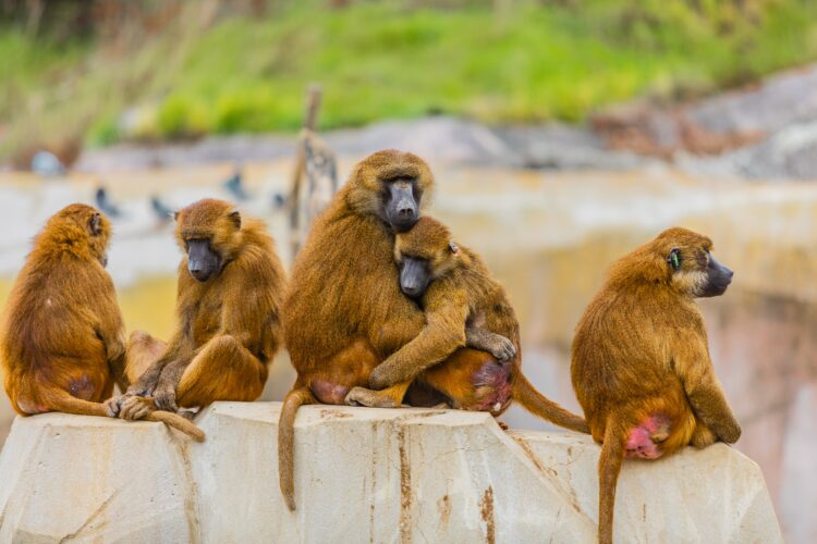 5 monkeys experiment